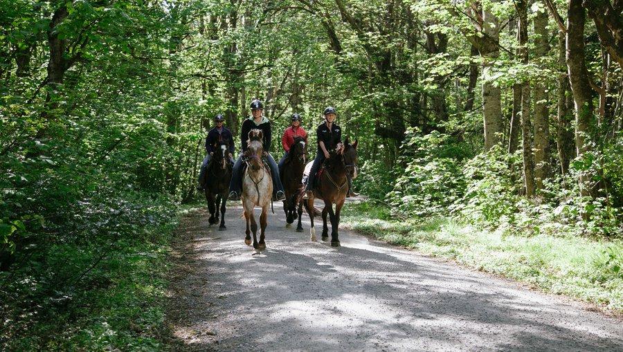 Peel Forest Horse Trekking